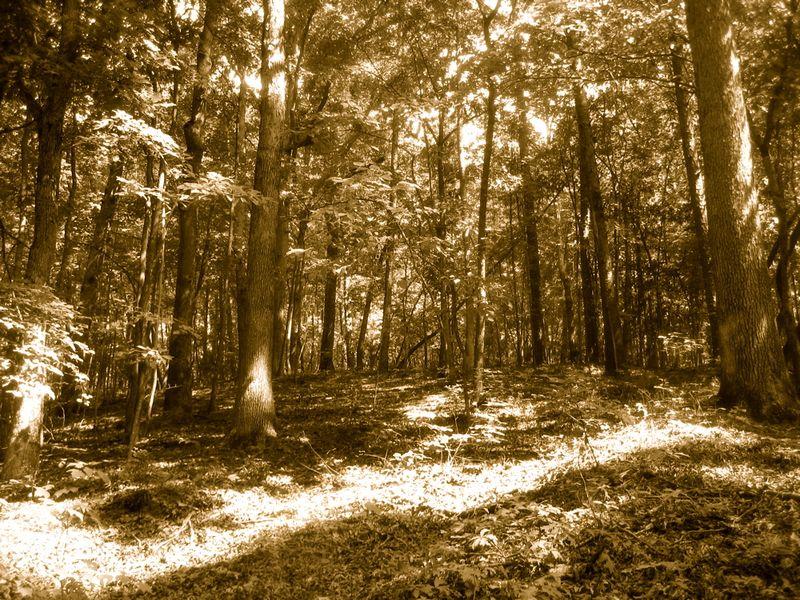 Woods 1b